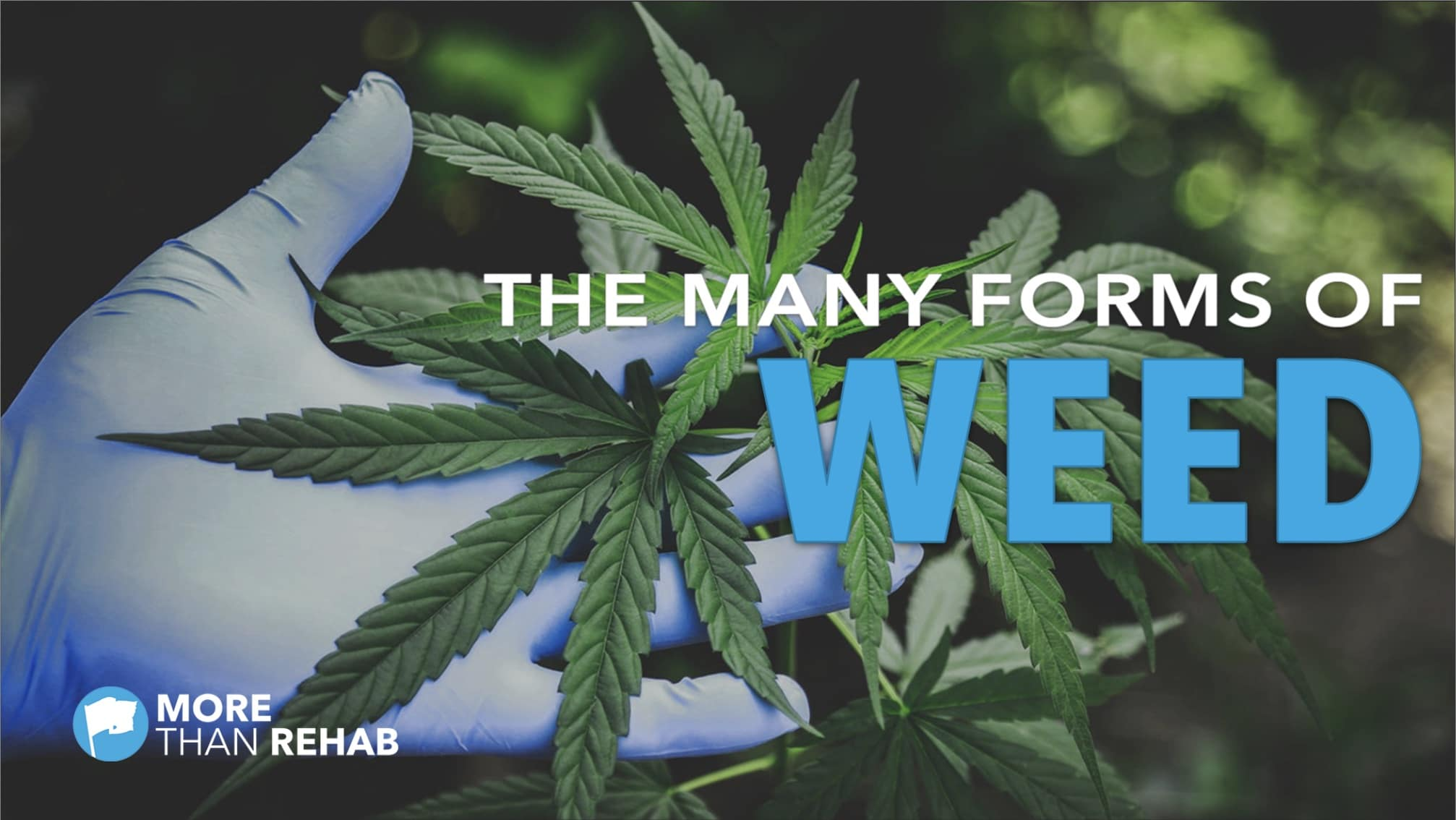 many-forms-of-weed-cannabis-marijuana-addiction-hashish-shatter-dabs-420