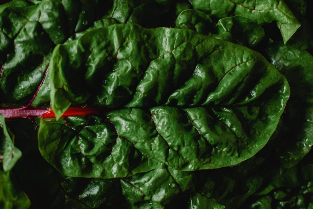 alcohol-drug-detox-leafy-greens-eating-healthy-during-recovery-Houston-Texas